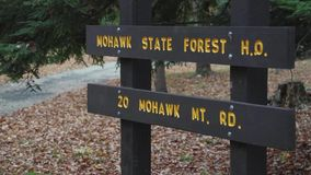 Mohawk Mountain Forest (8 of 9) stock footage