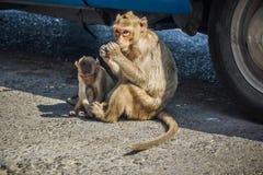 Moher und Kind des Affen sitzen auf der Straße essen Lebensmittel Stockfotografie