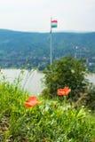 Mohnblume blüht am Hügel von Visegrad-Schloss und von ungarischer Flagge am Hintergrund, Visegrad Stockfotografie
