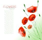 Mohnblume-Blumen-Aquarell Stockfoto
