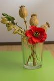 Mohnblume, Hafer und grüner Zweig im Glas Lizenzfreies Stockbild