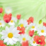 Mohnblume und Gänseblümchen Lizenzfreies Stockfoto