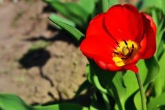 Mohnblume und Schatten Stockfotos