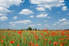 Mohnblume und Wolken Stockfotos
