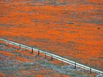Mohnblume-Zaun-Zeile Stockbilder