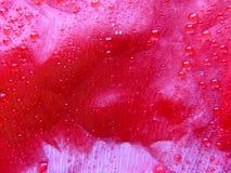 Mohnblumeblatt 3 Stockfoto