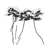 Mohnblumeblumen lizenzfreie abbildung
