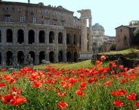 Mohnblumefeld hinter Kolosseum in Rom, Italien Stockbild
