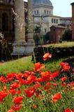 Mohnblumefeld hinter Kolosseum in Rom, Italien Stockfoto