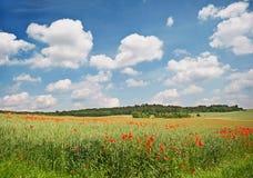 Mohnblumefeld. Landschaft Stockbilder
