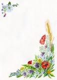 Mohnblumen Stockbild