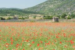 Mohnblumen auf einem französischen Gebiet Lizenzfreie Stockbilder