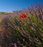 Mohnblumen auf einem Gebiet des Lavendels mit Stadt von Manosque im Hintergrund Stockfotos
