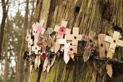 Mohnblumen an einem Baum mit Stacheldrahtflandern-Feldern Lizenzfreies Stockfoto