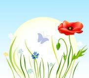 Mohnblumen gegen den Himmel stock abbildung