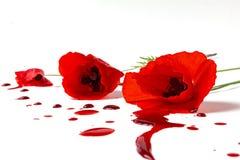 Mohnblumen mit blutigem Stockbilder