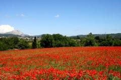 Mohnblumen in Provence Lizenzfreies Stockbild