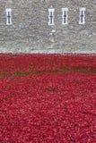 Mohnblumen am Tower von London Lizenzfreie Stockfotografie