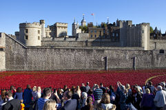 Mohnblumen am Tower von London Stockbilder