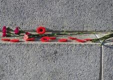 Mohnblumen und Gartennelken für Erinnerungs-Tag Lizenzfreies Stockbild
