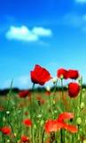 Mohnblumen und Himmel mit einzelnen Wolken nach Stockbild