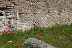 Mohnblumen und Ruinen Stockbild