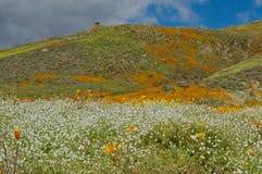 Mohnblumen und Weiß auf einem Bergabhang lizenzfreies stockbild