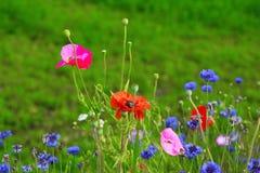 Mohnblumen und wilde Blumen Lizenzfreies Stockfoto