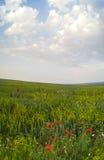 Mohnblumen unter blauem Himmel Stockbilder