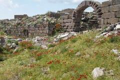 Mohnblumen wachsen unter griechischen Ruinen Stockbilder