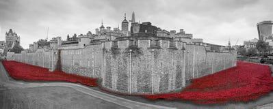 Mohnblumen zeigen am Tower von London an Stockbild