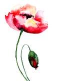 Mohnblumenblumen Stockbild