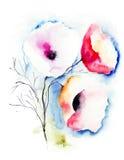 Mohnblumenblumen Stockfoto