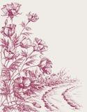 Mohnblumenblumen auf der Straße lizenzfreie abbildung