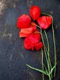 Mohnblumenblumen auf dunkler Tabelle Stockfotos