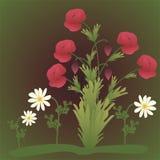Mohnblumenblumen und -kamille Stockfoto