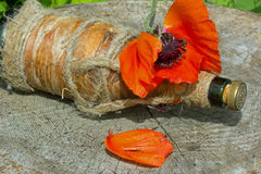 Mohnblumenblumenblatt Stockbild