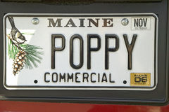 Mohnblumeneitelkeit kundenspezifisches Maine-Kfz-Kennzeichen, Acadia-Nationalpark, Maine Lizenzfreies Stockbild