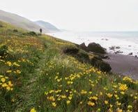 Mohnblumenfeld auf der Küste stockbild