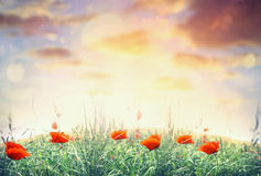 Mohnblumenfeld über Sonnenunterganghimmel, Naturlandschaftshintergrund Lizenzfreie Stockfotografie
