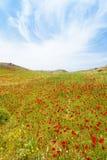 Mohnblumenfelder von Prevelhi Lizenzfreie Stockfotografie