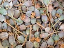 Mohnblumenköpfe stellten viele Beschaffenheit ein Stockbild