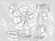 Mohnblumenskizze auf einem grauen Hintergrund vektor abbildung