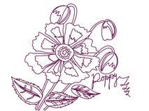 Mohnblumenskizzenweiß und -rotwein Lizenzfreies Stockfoto