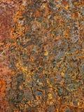 Moho del hierro Fotografía de archivo libre de regalías