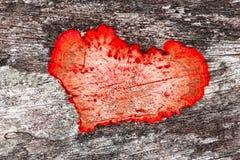 Moho en forma de corazón Fotos de archivo libres de regalías