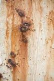 Moho y fondo de la corrosión Foto de archivo
