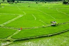 Moine de la Thaïlande marchant à la ferme de riz Photo libre de droits