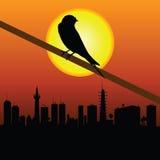 Moineau avec la ville dans l'illustration de vecteur de fond Image libre de droits