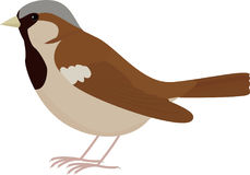Moineau brun d'oiseau de bande dessinée Photos stock